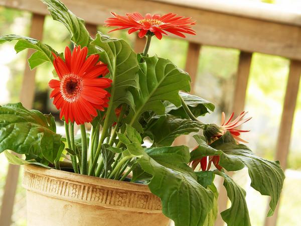 Растения умеют очищать воздух дома