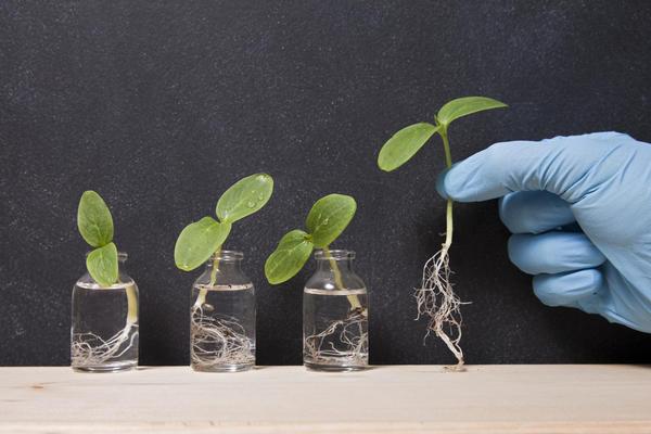 К регуляторам роста относятся ауксины, гиббереллины, цитокинины, этилен и другие