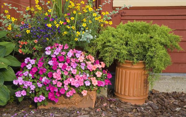 Выращивание цветов и овощей в разнообразных емкостях популярно во всем мире