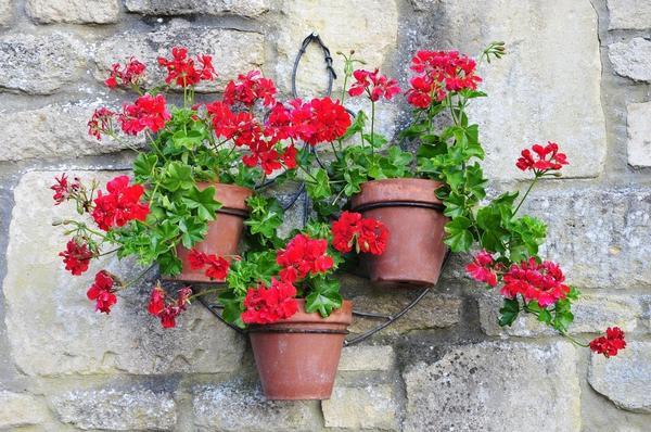 Вертикальные сады и огороды