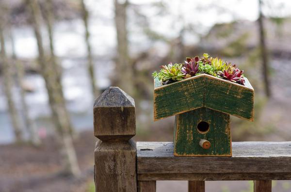 Скворечник с мини-садом на крыше