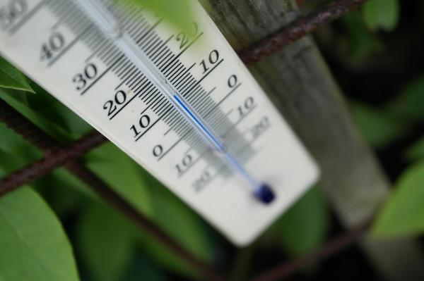 Для каждого растения оптимальным будет свой температурный режим