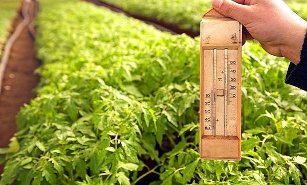 При какой температуре лучше выращивать овощи