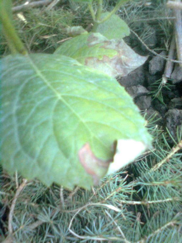 малина - фото от подписчика