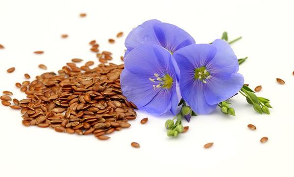 Семя льна является лекарственным сырьем