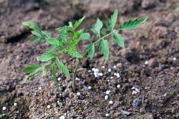 Признаки азотного голодания часто проявляются замедлением роста и развития