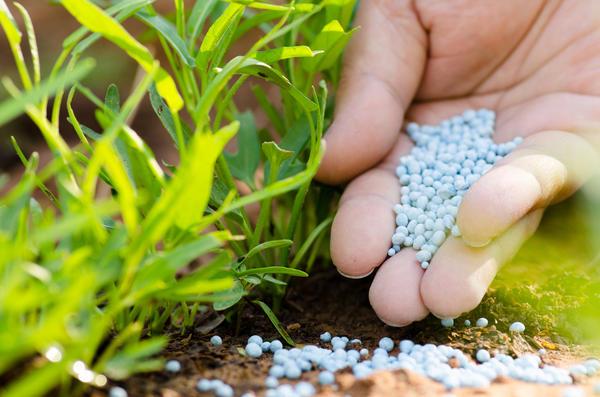 Есть две формы азота, доступных для усвоения растениями, - нитратная и аммиачная