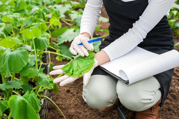 Есть среди огородников специалисты-агрономы, которые получили высшее профильное образование