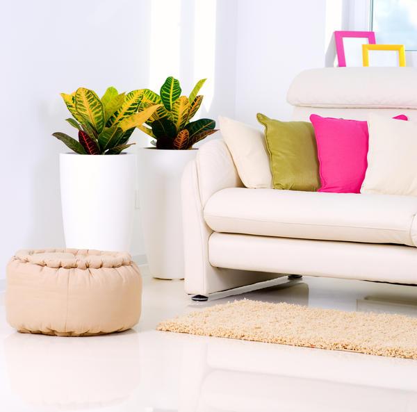 Напольные растения для гостиной