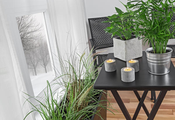 Расстановка растений около окна