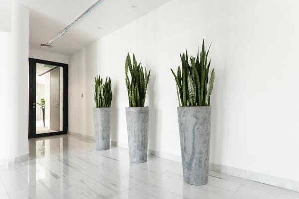 Высокие растения зрительно увеличивают вертикаль