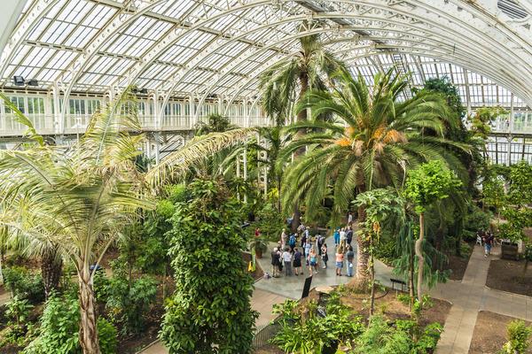 Пальмовая оранжерея в Кью Гарденс, Лондон