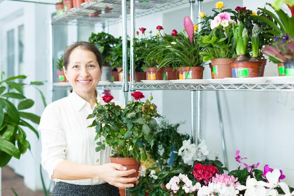 Обычно розы приобретают в виде саженцев в горшочках