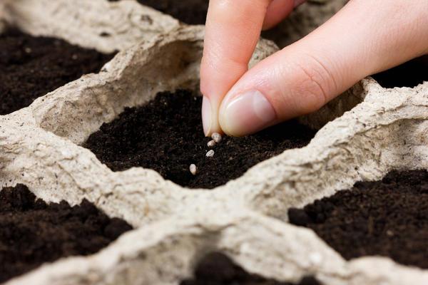 Поначалу бывает сложно определиться со сроками посева и посадки