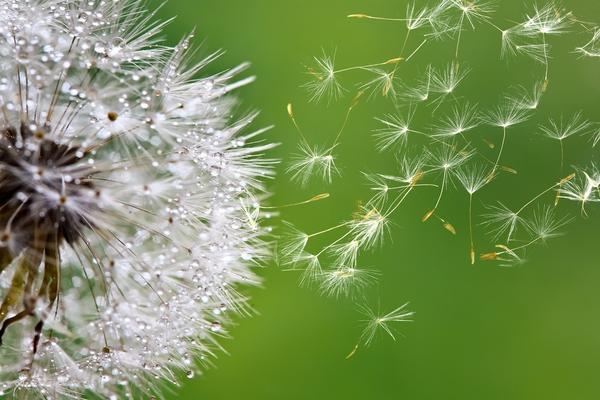 Природа не обрабатывает семена протравителями, но они все равно дают всходы в положенный срок