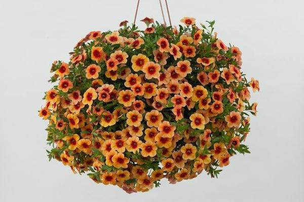 фото с сайта http://www.danziger.co.il