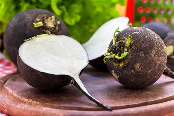 Редька: какая бывает, как вырастить, в чем польза, вкусный салат