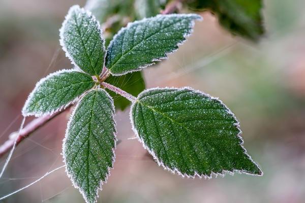Заморозки способны стать причиной гибели многих теплолюбивых культур
