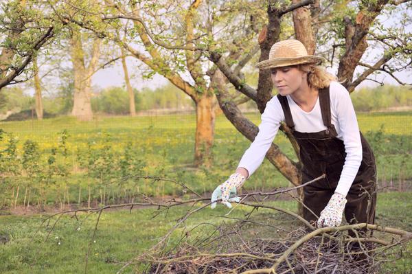 Санитарная обрезка - обязательный первый шаг в борьбе за старый сад
