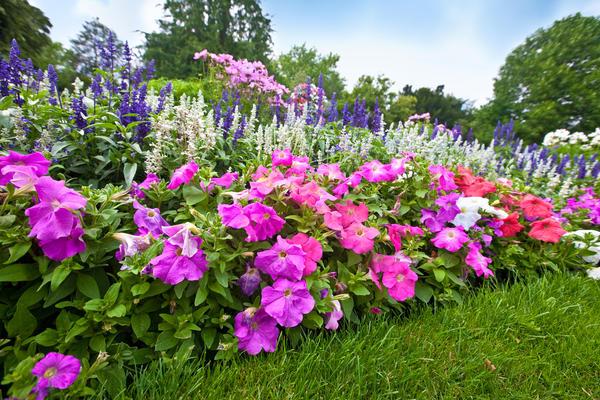 Растения для кислых почв