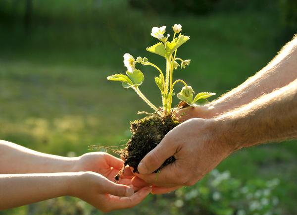 Если всех соседей и родственников-садоводов уже одарили, а красота по-прежнему плодится и размножается, самое время поделиться ею с другими увлеченными дачниками