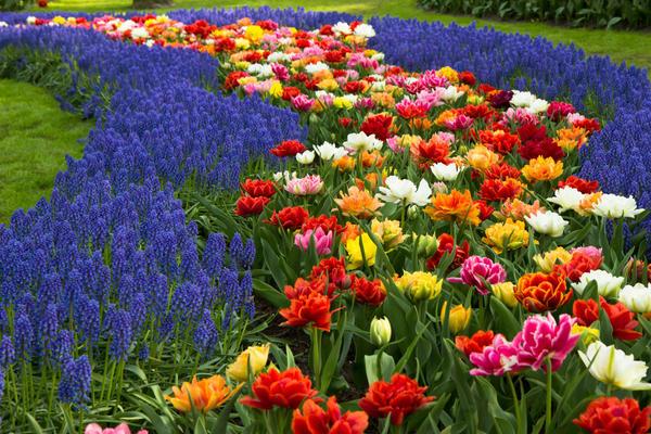 Цветы для ландшафтного дизайнера все равно что краски для живописца