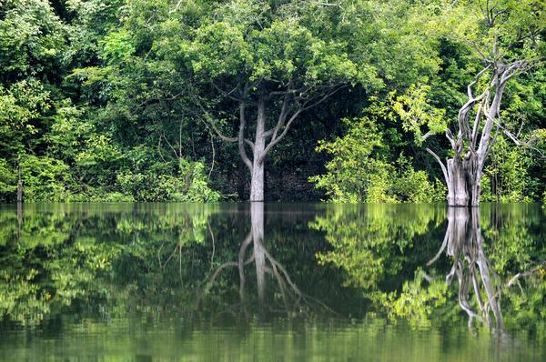 Амазонская сельва