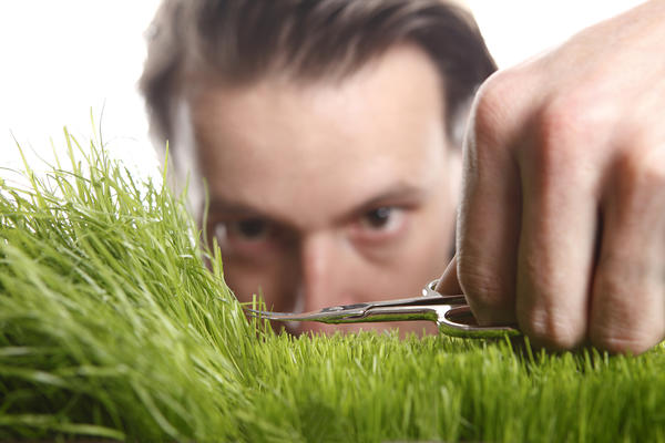 Чтобы сформировать дёрн, в первый год подстригайте газон примерно раз в неделю