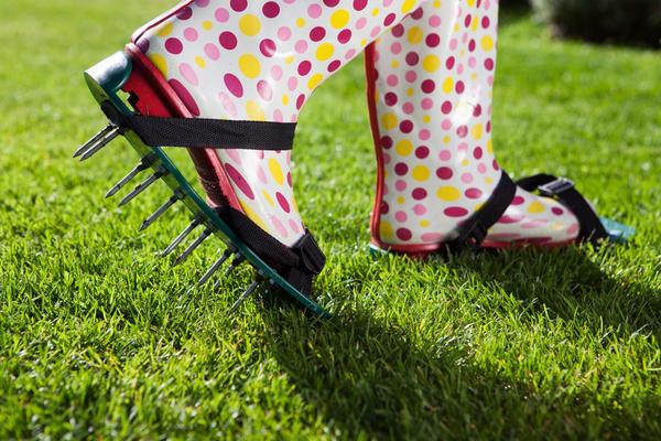 Если дерн слишком плотный, рекомендуем прокалывать его палкой или специальным аэратором для почвы