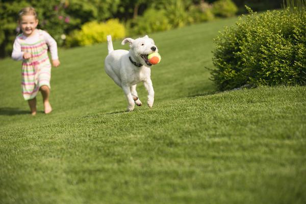 Универсальный газон прекрасно подходит для ходьбы, бега и игр