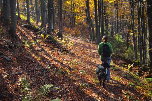 В разгар сезона воздержитесь брать четвероногого друга с собой в лес