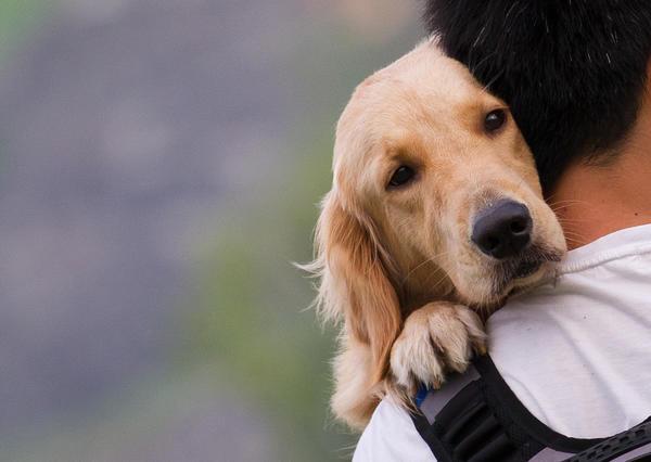 Многие владельцы собак и не подозревают об опасностях, которые несут их питомцам клещи и комары