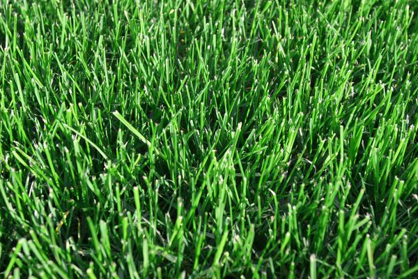 Идеальный газон можно получить только с гербицидом