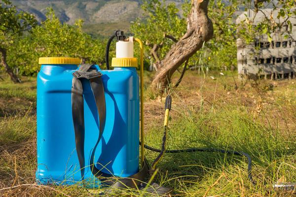 Препараты группы глифосата проявляют высокую эффективность только тогда, когда сорняки имеют достаточно развитую надземную массу
