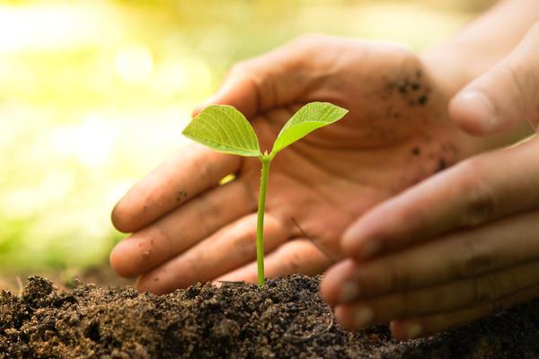 Признаками дефицита микроэлементов становятся проблемы развития растений.
