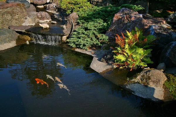 Главное - если уж пришла идея завести рыбок, появился энтузиазм, не лениться, набраться терпения и знаний