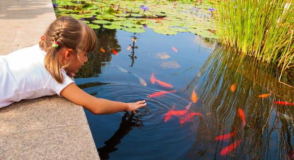 Среди любителей дачного отдыха все большей популярностью пользуются садовые пруды