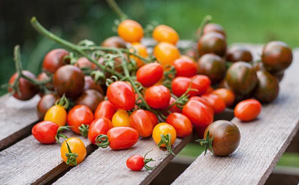 Вне зависимости от сорта, томаты, выросшие в открытом грунте, хранятся лучше, чем тепличные