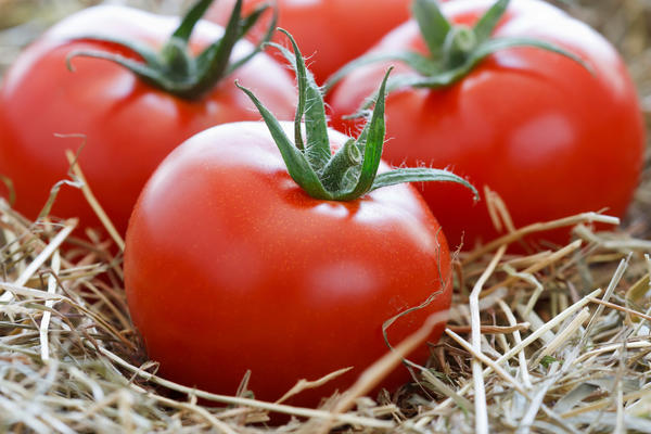 Сохранить помидоры свежими до весны - желание и цель многих дачников