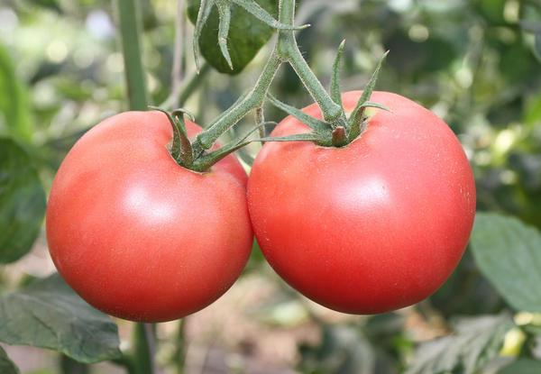 Розовоплодные помидоры
