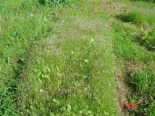 неизвестная трава