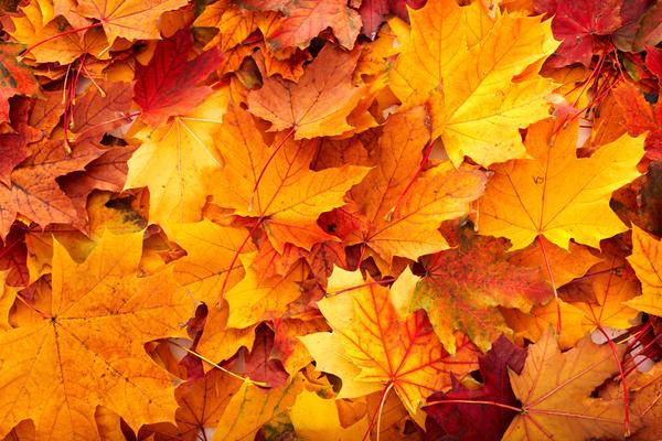Если вы собираетесь использовать листья деревьев, учтите, что они довольно быстро высохнут, потеряют цвет и скукожатся