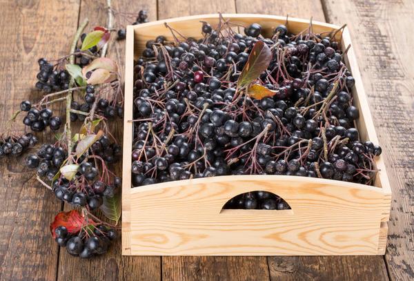 В свежем виде черноплодная рябина сохраняет все полезные свойства
