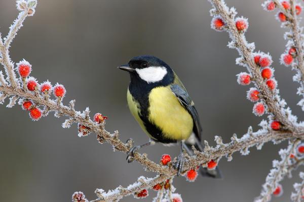 Решение сохранять яркость и оригинальность своего сада зимой при помощи растений - вариант безошибочный