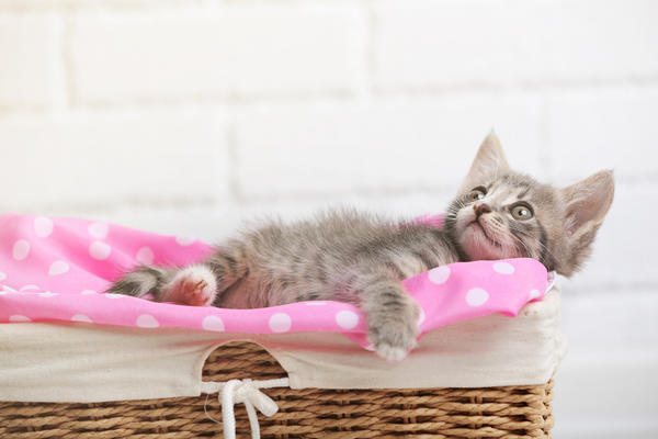 Кошки тоже любят корзинки