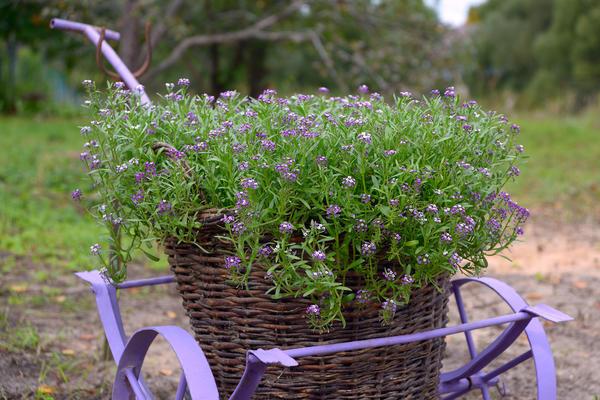 Самый экзотический вид материала для садовой тачки - ивовые прутья