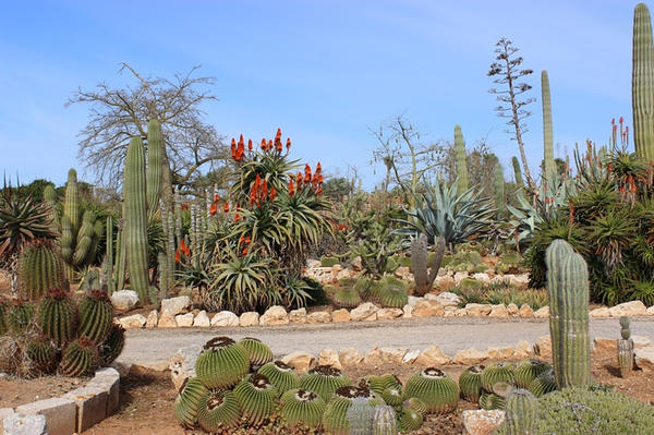 Аренарий представляет собой песчаный сад.