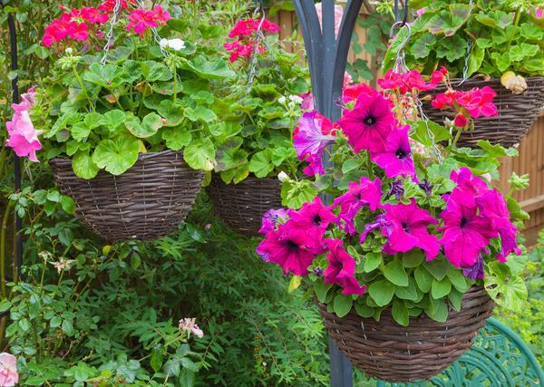 Любители цветов непременно оценят подвесные корзины-кашпо