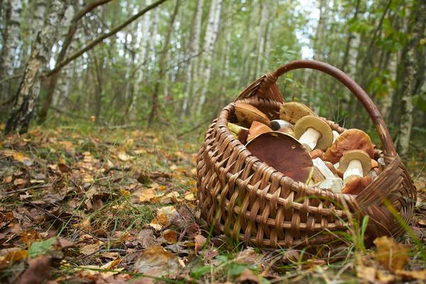 Лукошко для грибов