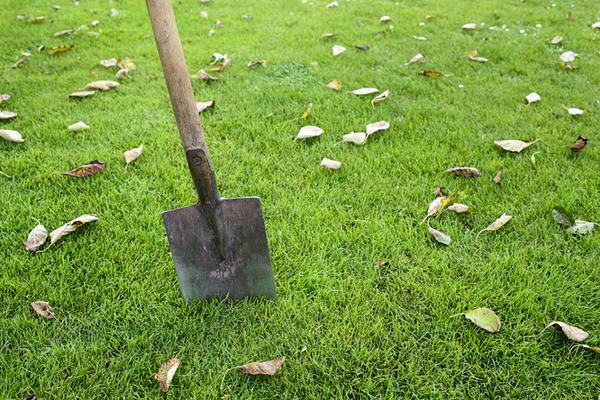 Подготавливаем аренарий к высадке растений